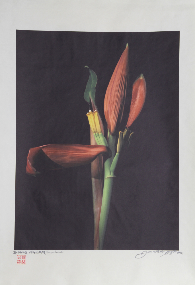 Jonathan Singer, Heliconia From Botanica Magnifica